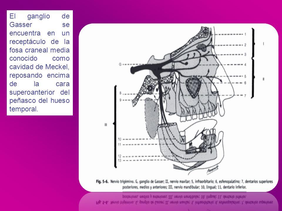 El ganglio de Gasser se encuentra en un receptáculo de la fosa craneal media conocido como cavidad de Meckel, reposando encima de la cara superoanterior del peñasco del hueso temporal.