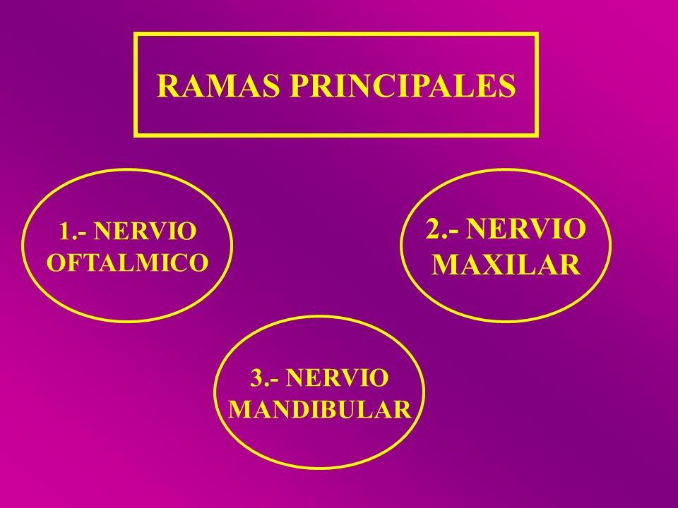 RAMAS PRINCIPALES 2.- NERVIO MAXILAR 1.- NERVIO OFTALMICO 3.- NERVIO
