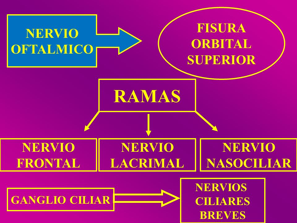 RAMAS FISURA ORBITAL SUPERIOR NERVIO OFTALMICO NERVIO FRONTAL NERVIO