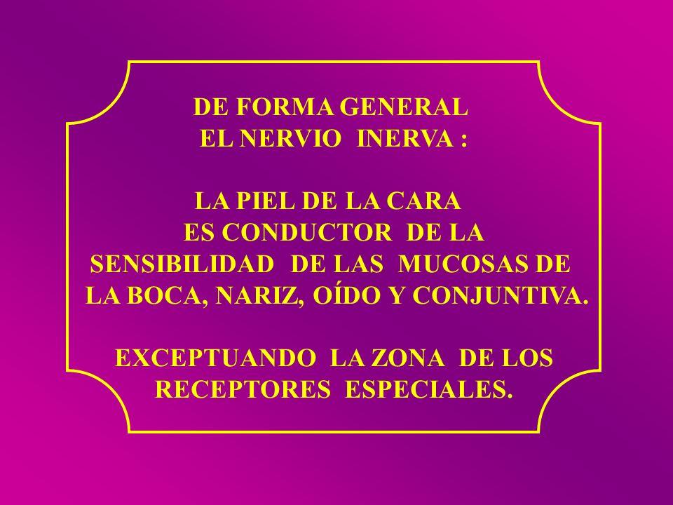 SENSIBILIDAD DE LAS MUCOSAS DE LA BOCA, NARIZ, OÍDO Y CONJUNTIVA.