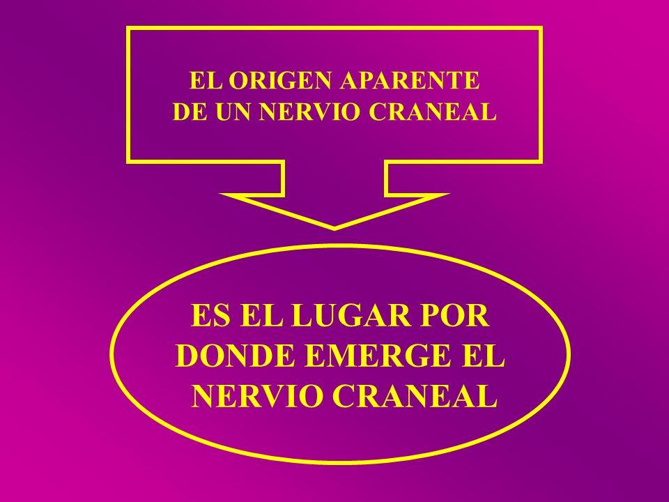 ES EL LUGAR POR DONDE EMERGE EL NERVIO CRANEAL