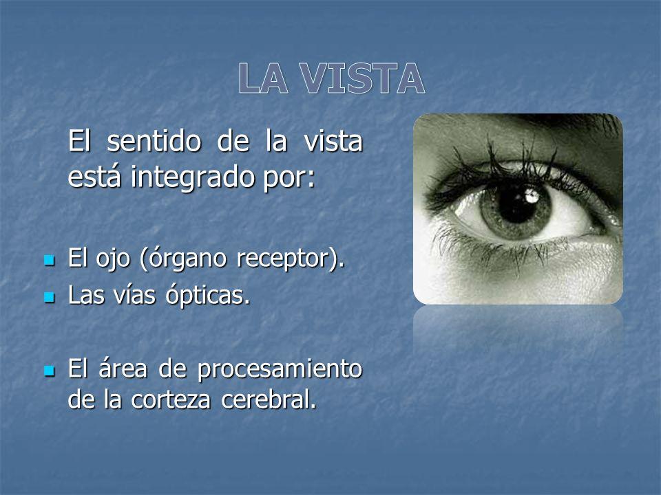 LA VISTA El sentido de la vista está integrado por: