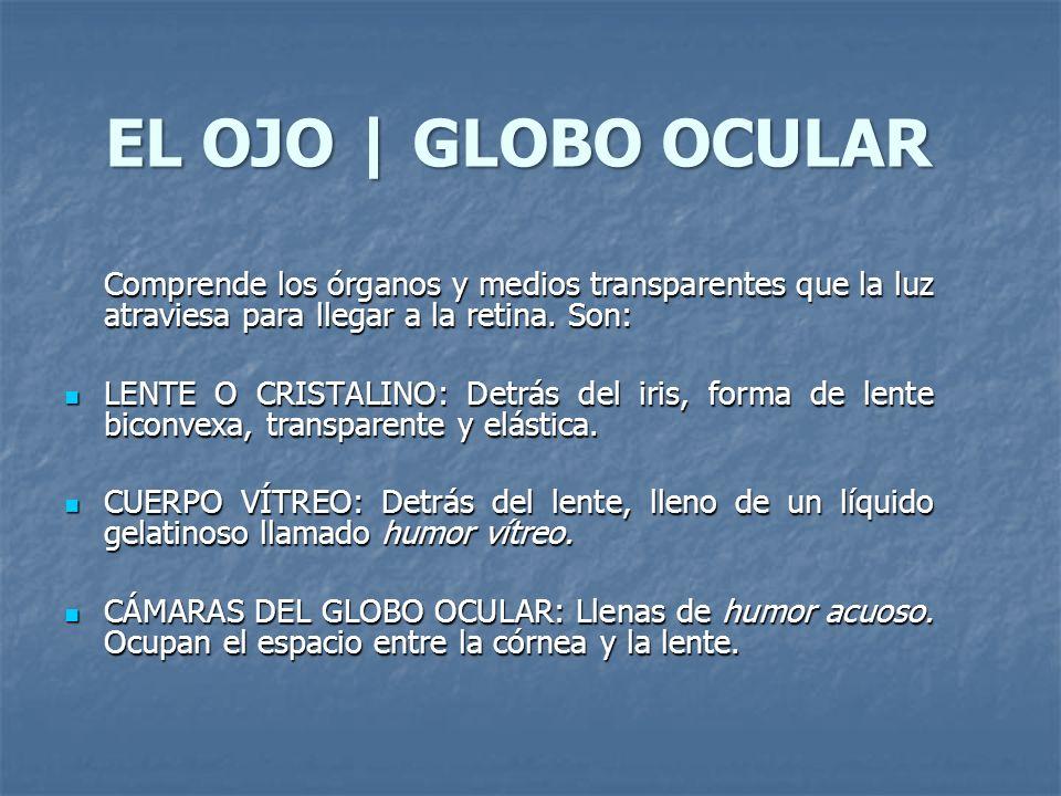 EL OJO | GLOBO OCULAR Comprende los órganos y medios transparentes que la luz atraviesa para llegar a la retina. Son:
