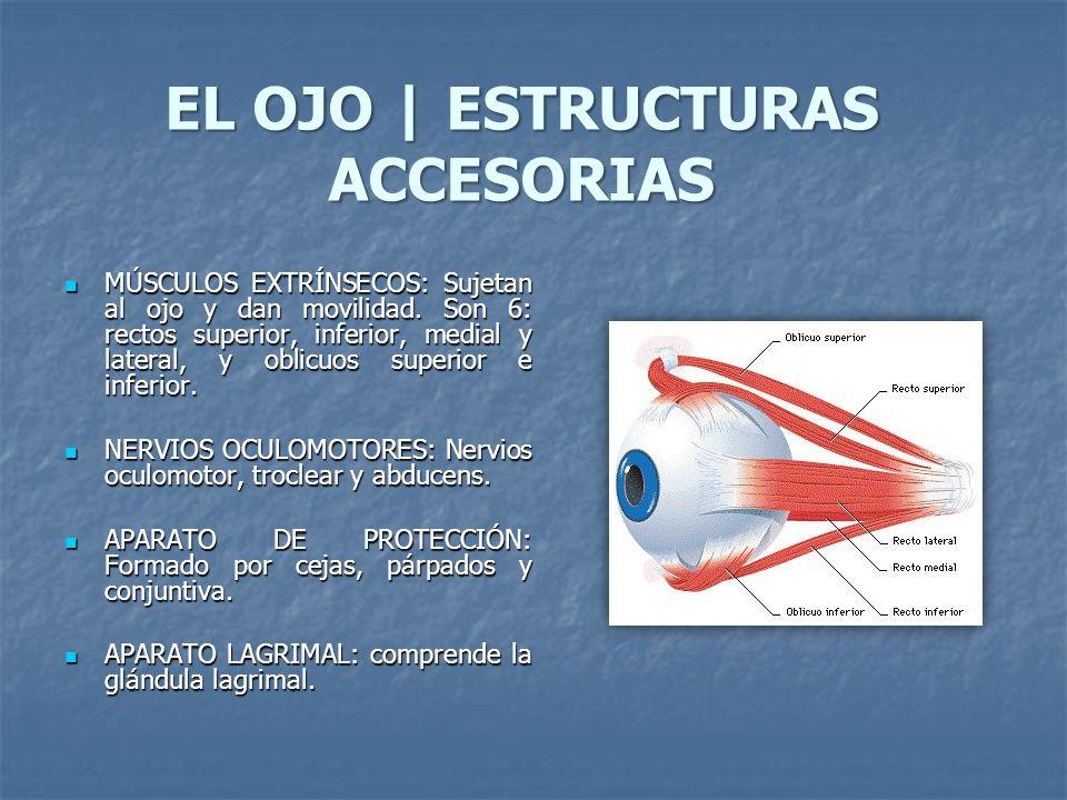 EL OJO | ESTRUCTURAS ACCESORIAS