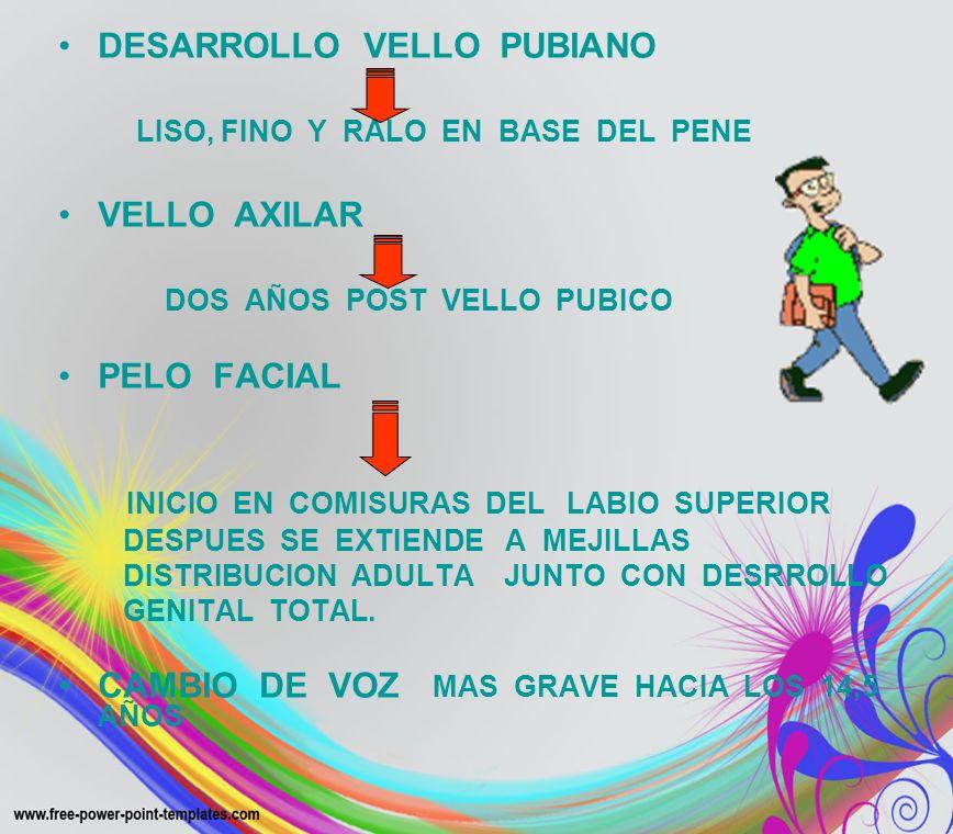 DESARROLLO VELLO PUBIANO LISO, FINO Y RALO EN BASE DEL PENE