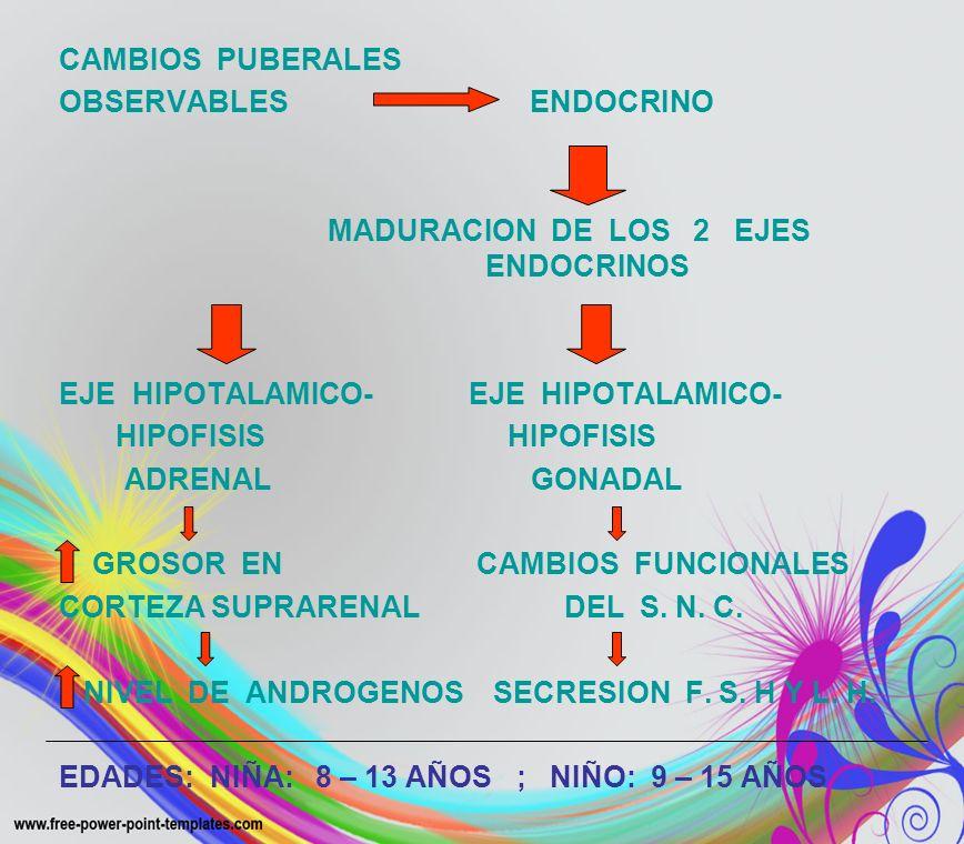 CAMBIOS PUBERALES OBSERVABLES ENDOCRINO. MADURACION DE LOS 2 EJES ENDOCRINOS.