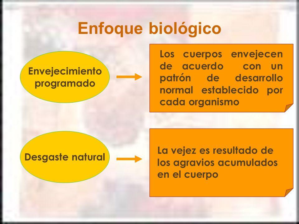 Enfoque biológico Los cuerpos envejecen de acuerdo con un patrón de desarrollo normal establecido por cada organismo.