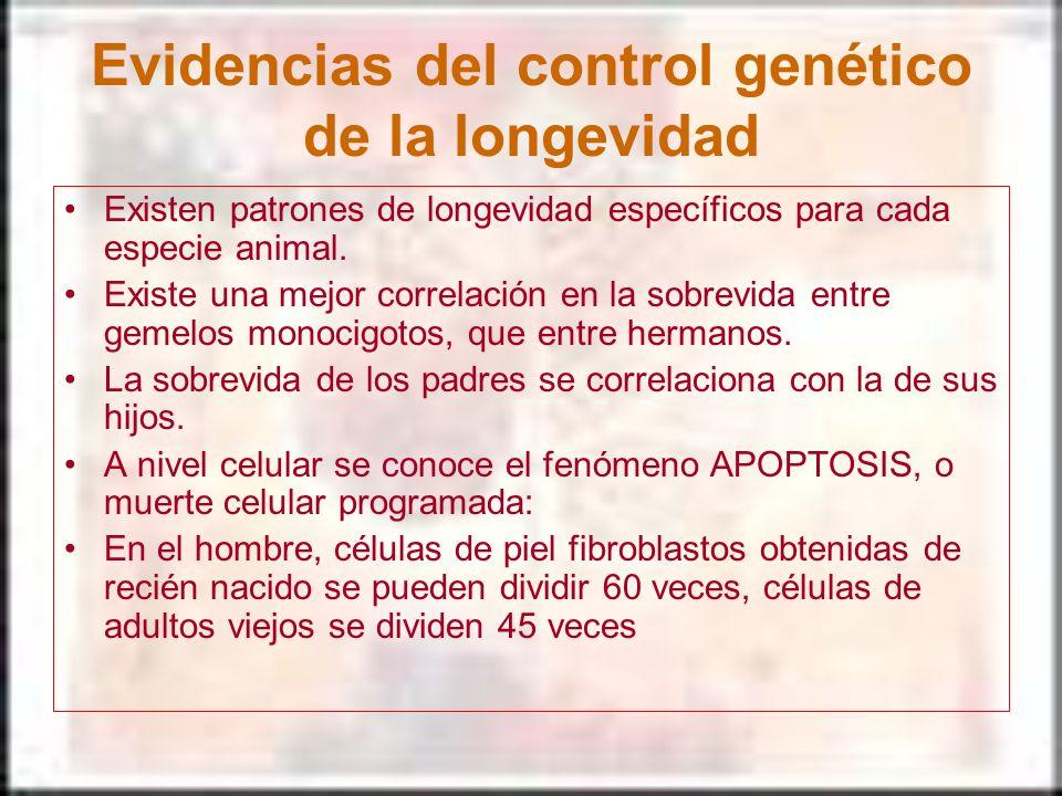 Evidencias del control genético de la longevidad