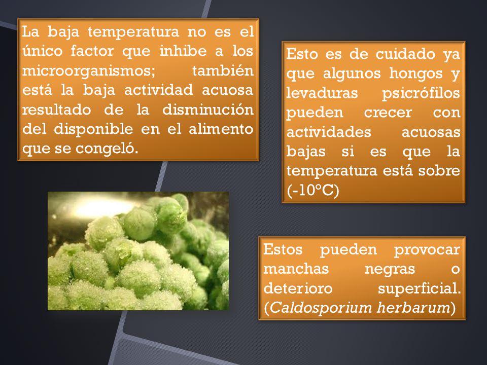 La baja temperatura no es el único factor que inhibe a los microorganismos; también está la baja actividad acuosa resultado de la disminución del disponible en el alimento que se congeló.