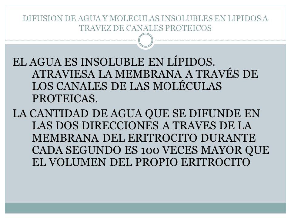 DIFUSION DE AGUA Y MOLECULAS INSOLUBLES EN LIPIDOS A TRAVEZ DE CANALES PROTEICOS