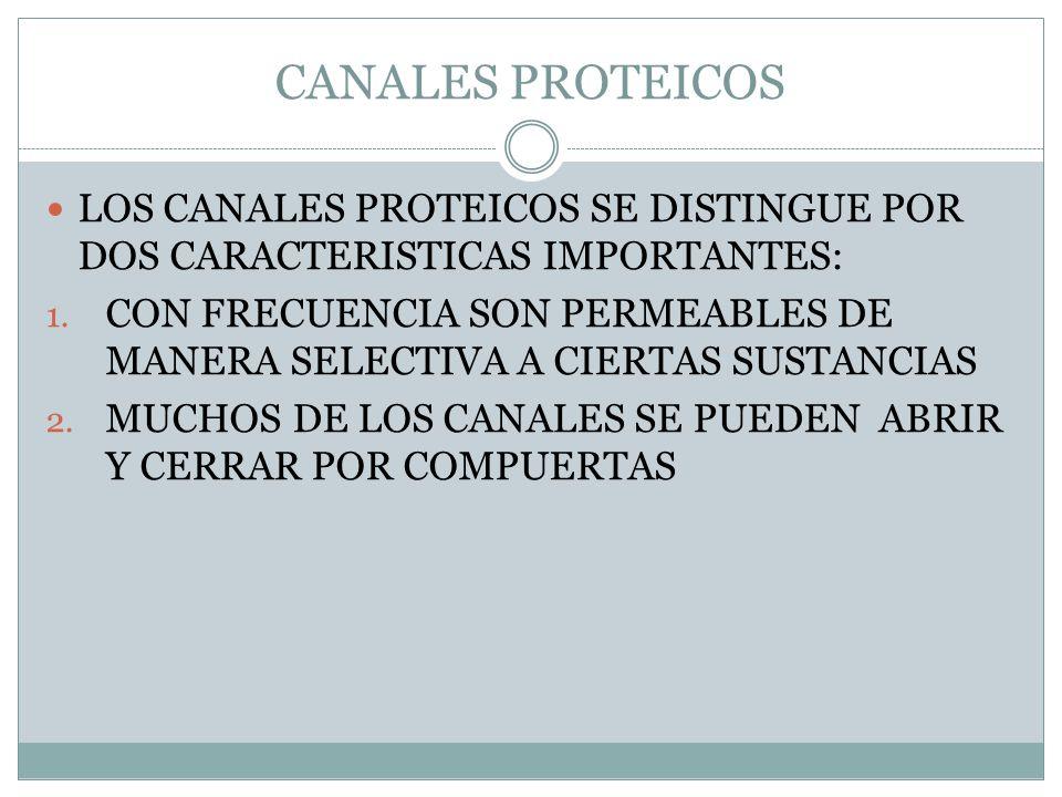 CANALES PROTEICOS LOS CANALES PROTEICOS SE DISTINGUE POR DOS CARACTERISTICAS IMPORTANTES: