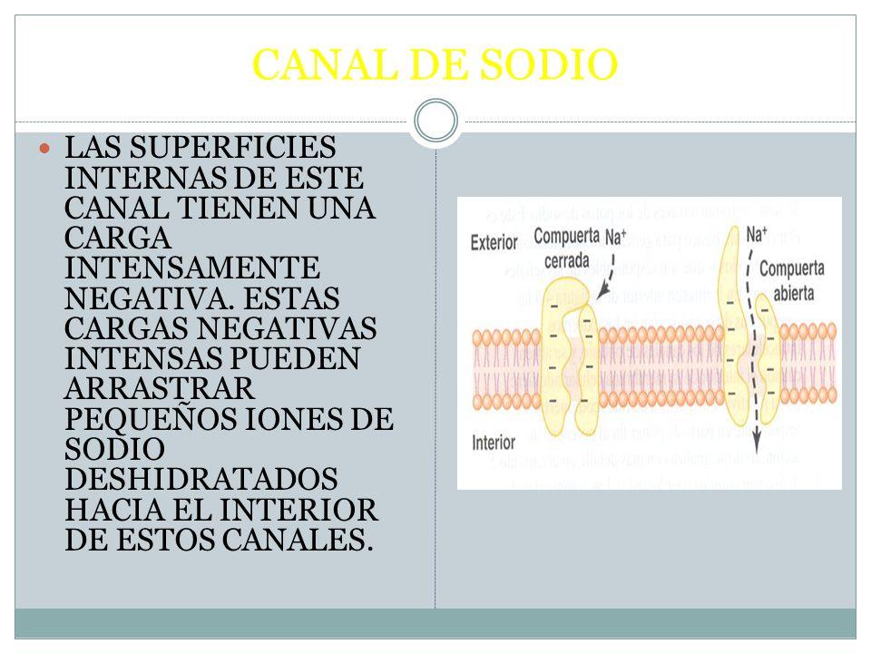 CANAL DE SODIO