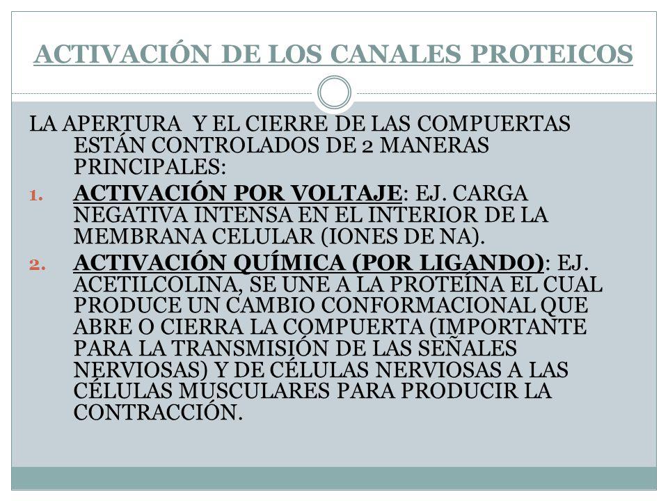 ACTIVACIÓN DE LOS CANALES PROTEICOS