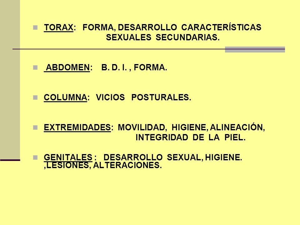 TORAX: FORMA, DESARROLLO CARACTERÍSTICAS