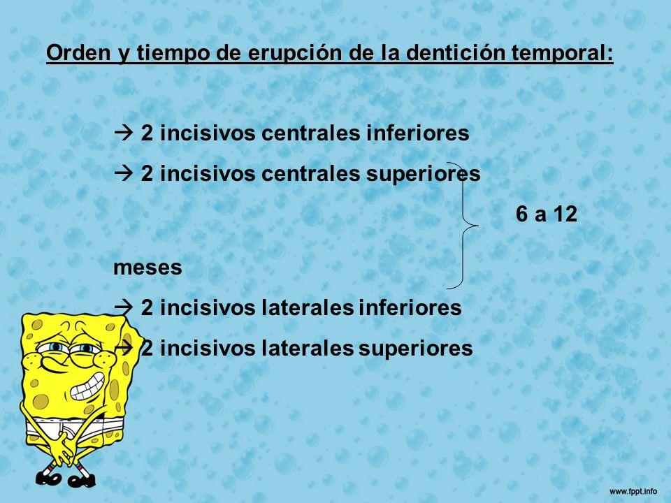 Orden y tiempo de erupción de la dentición temporal: