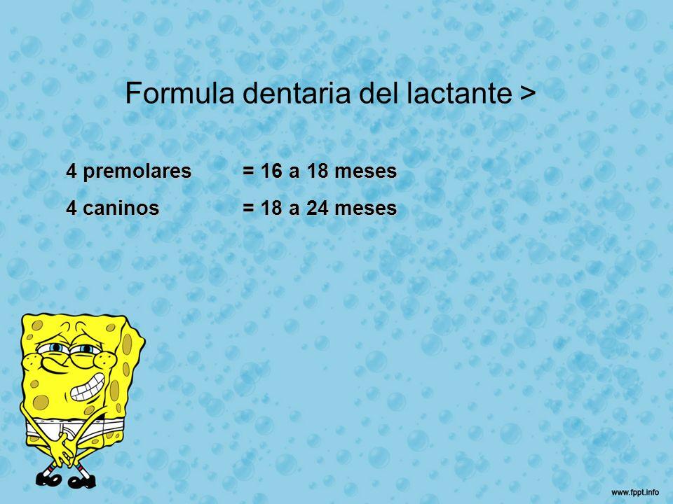 Formula dentaria del lactante >