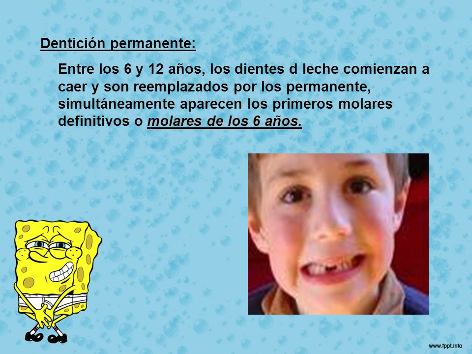 Dentición permanente: