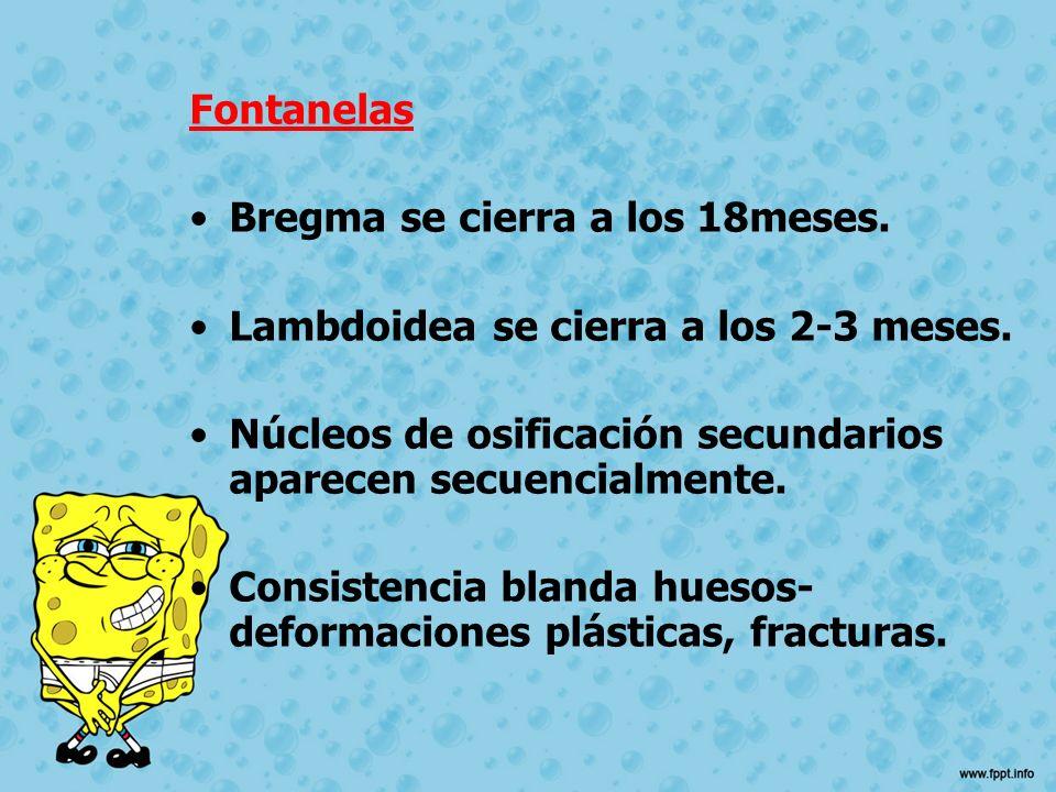 Fontanelas Bregma se cierra a los 18meses. Lambdoidea se cierra a los 2-3 meses. Núcleos de osificación secundarios aparecen secuencialmente.