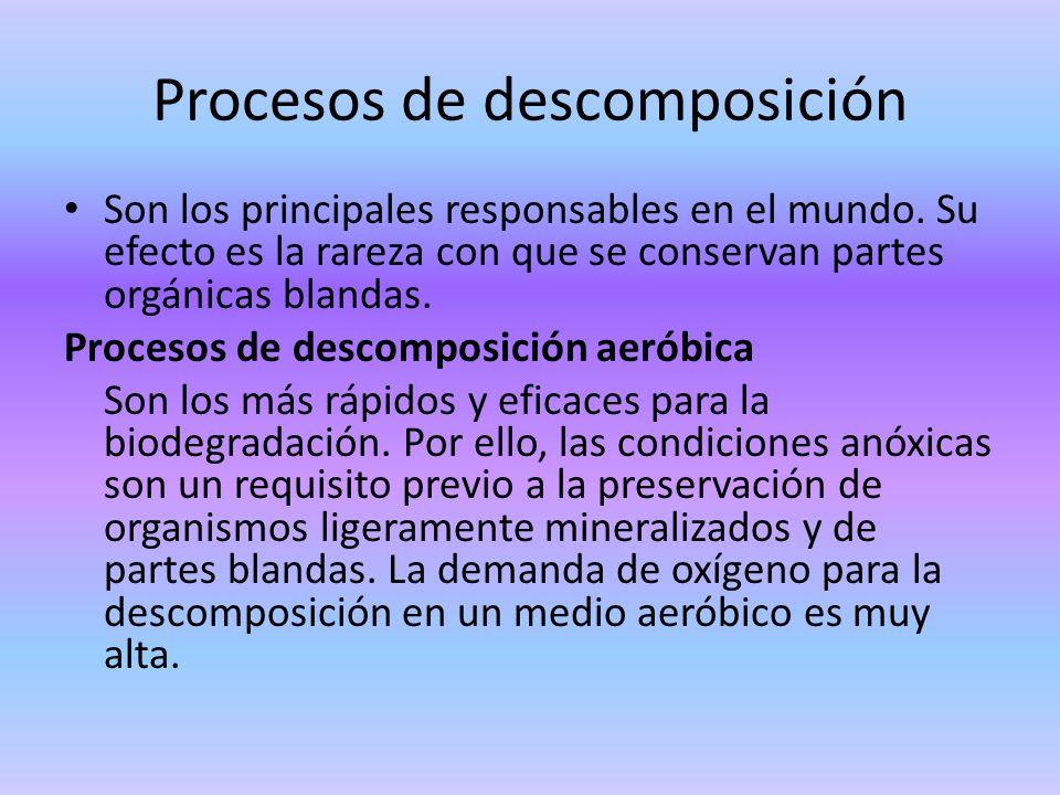Procesos de descomposición