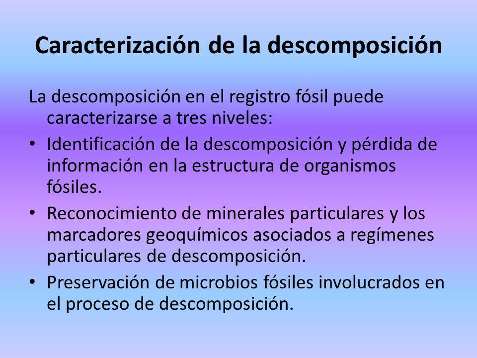 Caracterización de la descomposición