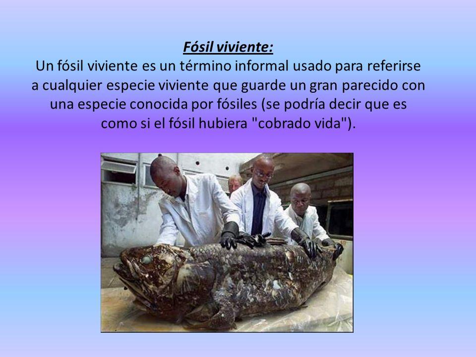 Fósil viviente: Un fósil viviente es un término informal usado para referirse a cualquier especie viviente que guarde un gran parecido con una especie conocida por fósiles (se podría decir que es como si el fósil hubiera cobrado vida ).