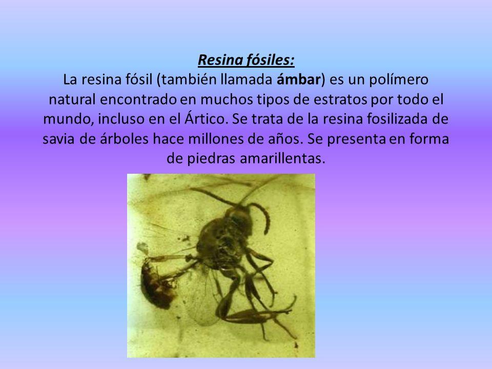 Resina fósiles: La resina fósil (también llamada ámbar) es un polímero natural encontrado en muchos tipos de estratos por todo el mundo, incluso en el Ártico.