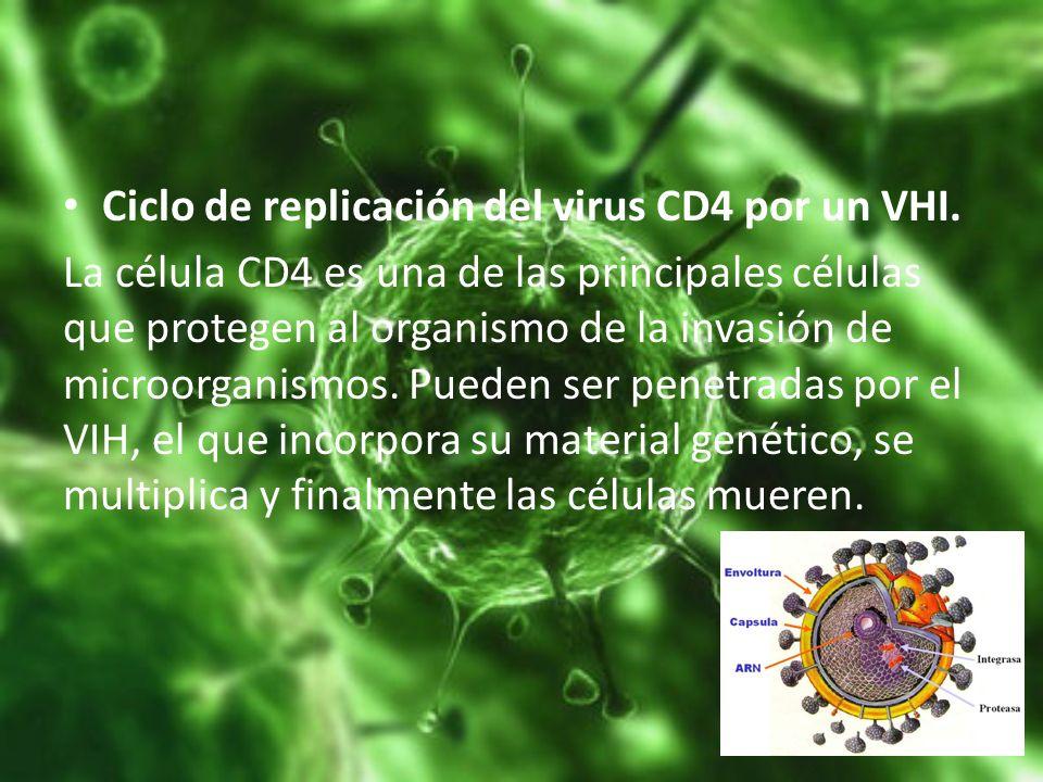Ciclo de replicación del virus CD4 por un VHI.