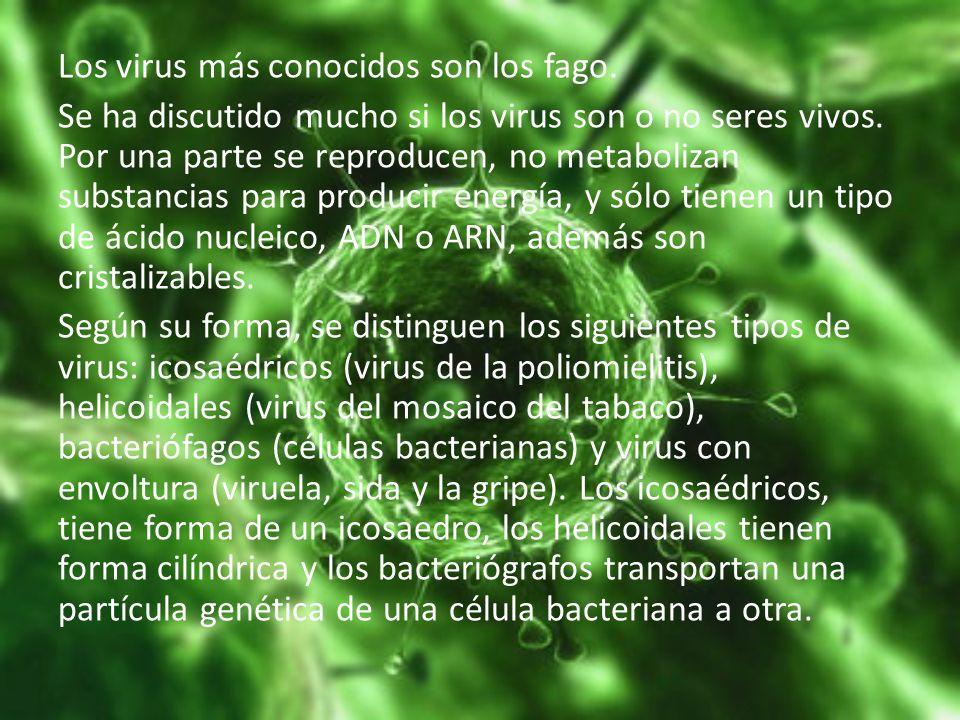 Los virus más conocidos son los fago