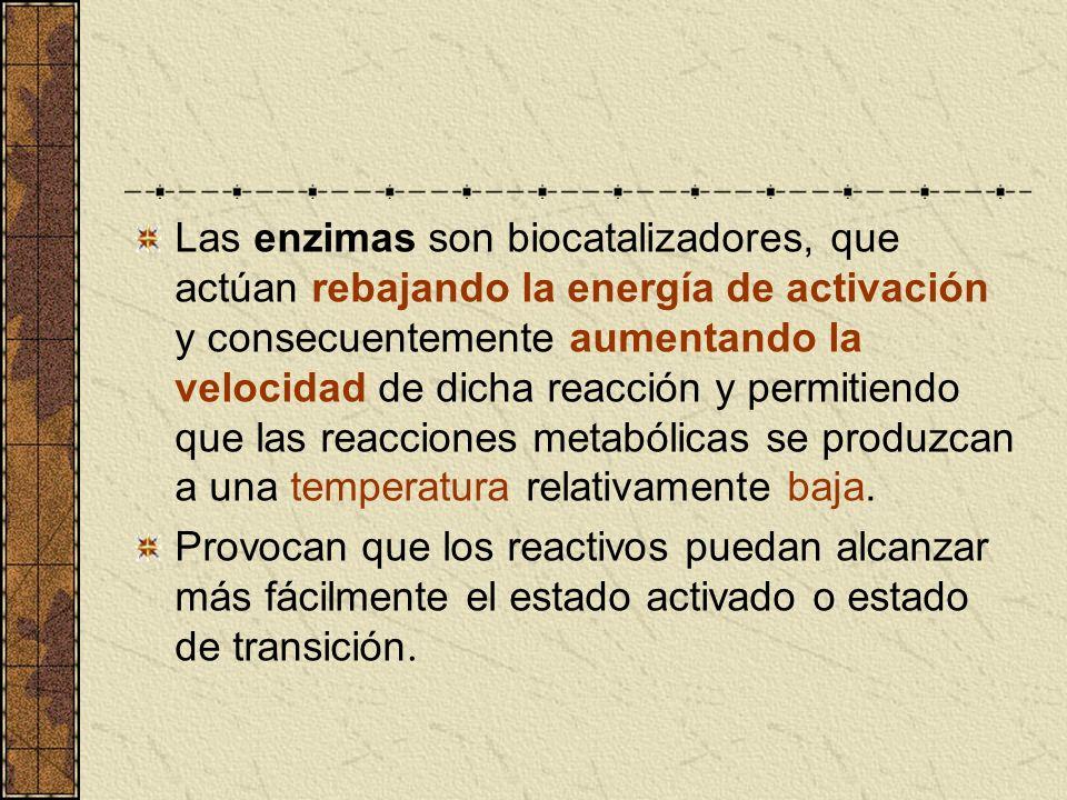Las enzimas son biocatalizadores, que actúan rebajando la energía de activación y consecuentemente aumentando la velocidad de dicha reacción y permitiendo que las reacciones metabólicas se produzcan a una temperatura relativamente baja.