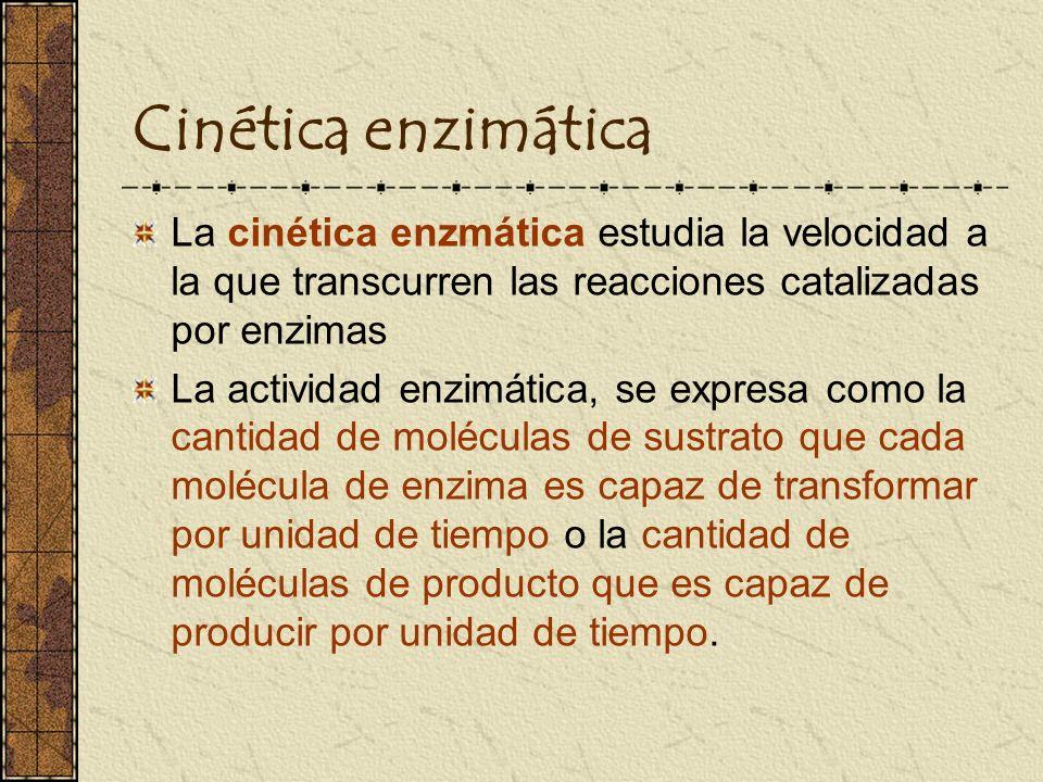 Cinética enzimática La cinética enzmática estudia la velocidad a la que transcurren las reacciones catalizadas por enzimas.