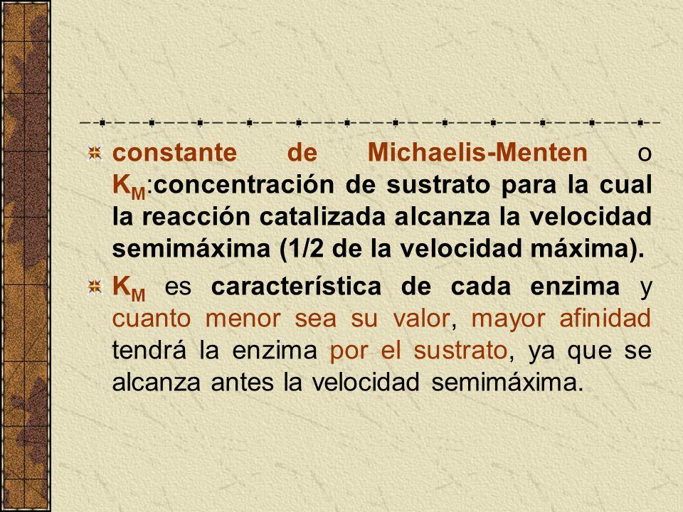 constante de Michaelis-Menten o KM:concentración de sustrato para la cual la reacción catalizada alcanza la velocidad semimáxima (1/2 de la velocidad máxima).