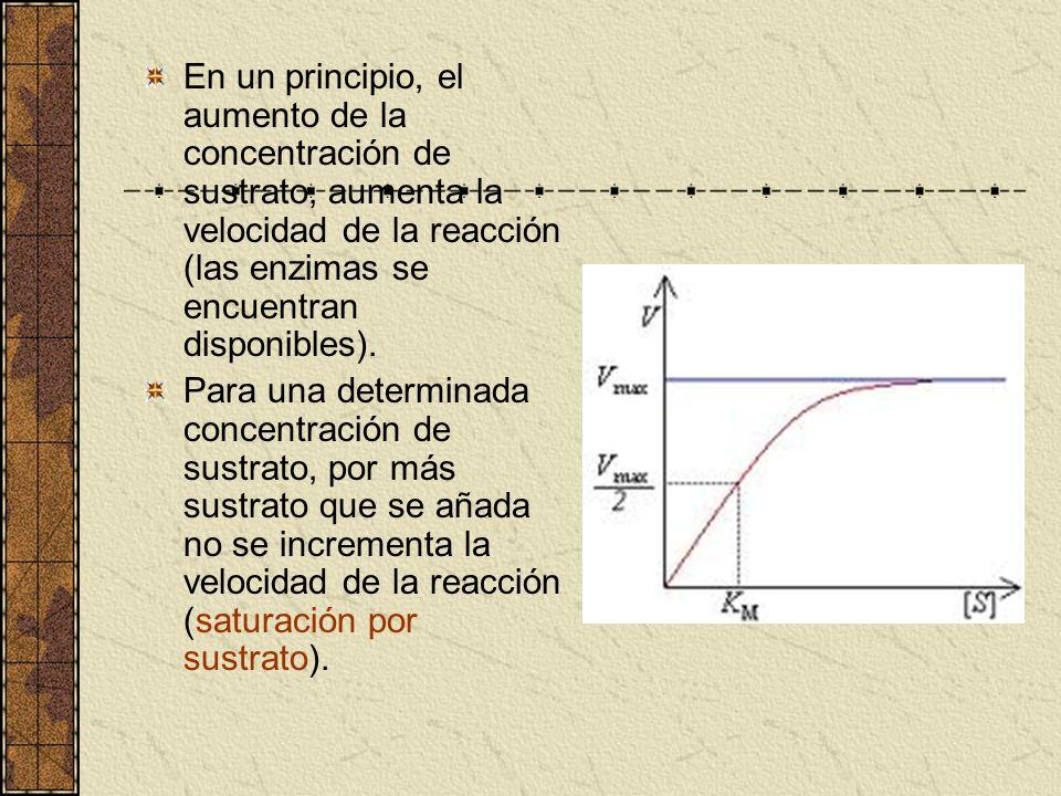 En un principio, el aumento de la concentración de sustrato, aumenta la velocidad de la reacción (las enzimas se encuentran disponibles).