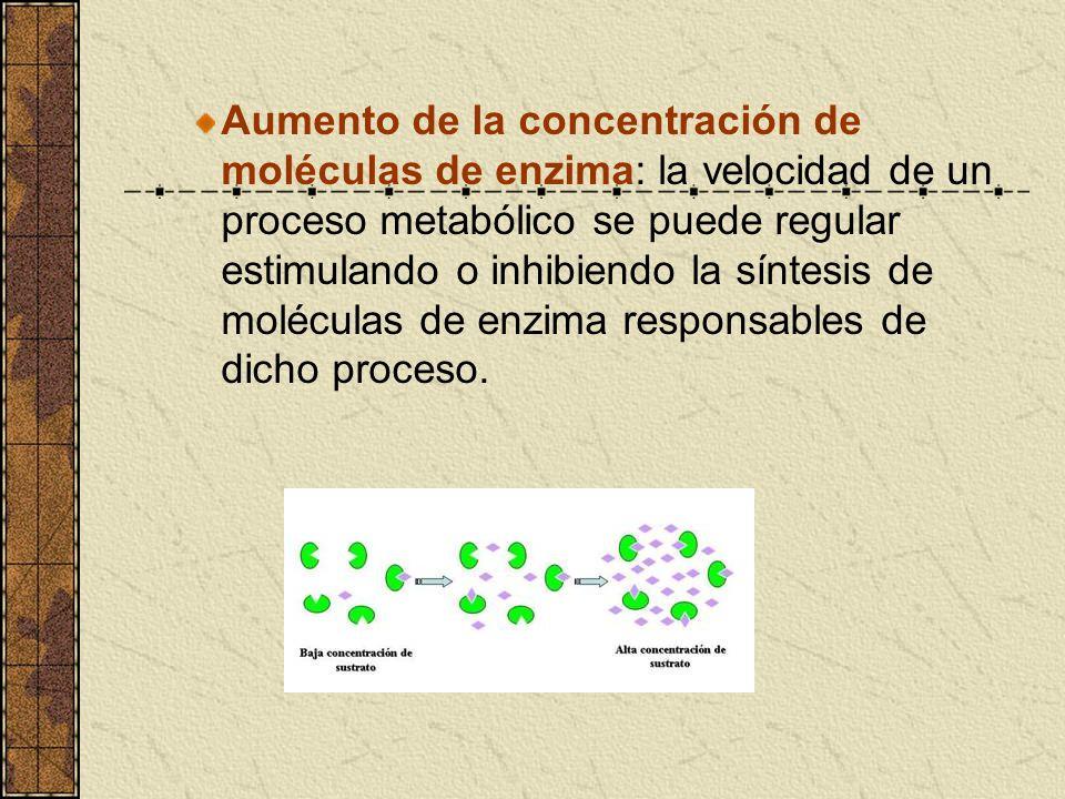 Aumento de la concentración de moléculas de enzima: la velocidad de un proceso metabólico se puede regular estimulando o inhibiendo la síntesis de moléculas de enzima responsables de dicho proceso.