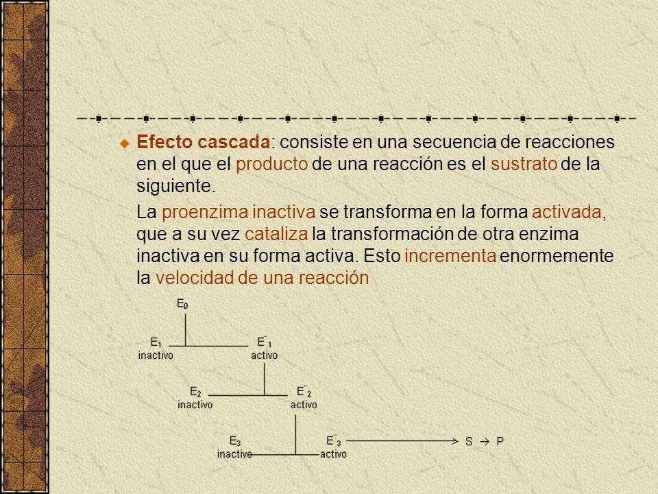 Efecto cascada: consiste en una secuencia de reacciones en el que el producto de una reacción es el sustrato de la siguiente.