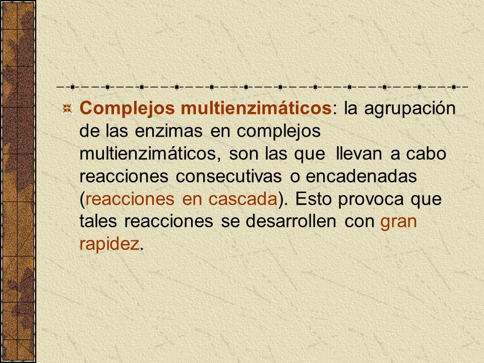 Complejos multienzimáticos: la agrupación de las enzimas en complejos multienzimáticos, son las que llevan a cabo reacciones consecutivas o encadenadas (reacciones en cascada).