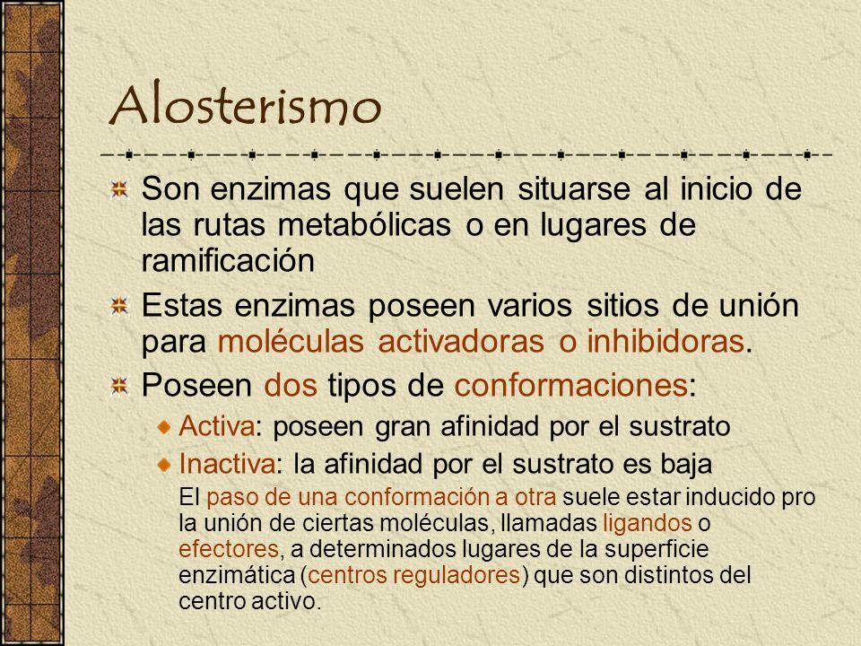 Alosterismo Son enzimas que suelen situarse al inicio de las rutas metabólicas o en lugares de ramificación.