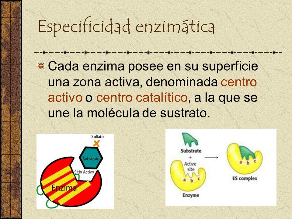 Especificidad enzimática