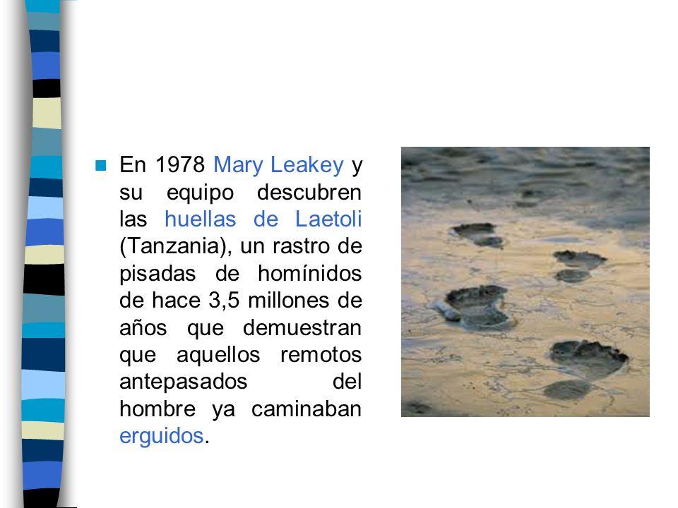 En 1978 Mary Leakey y su equipo descubren las huellas de Laetoli (Tanzania), un rastro de pisadas de homínidos de hace 3,5 millones de años que demuestran que aquellos remotos antepasados del hombre ya caminaban erguidos.