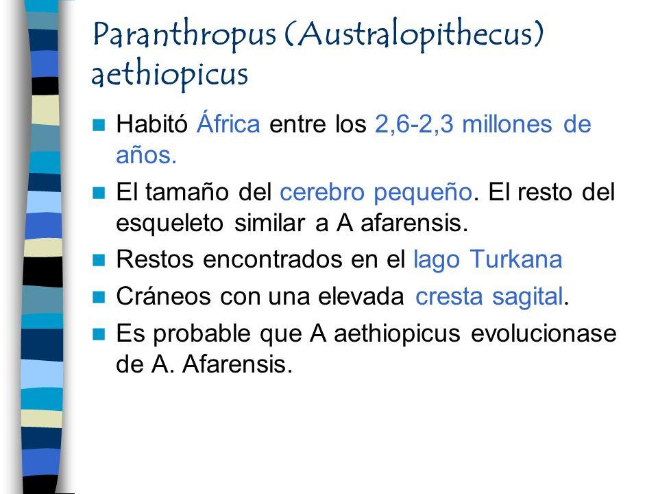 Paranthropus (Australopithecus) aethiopicus