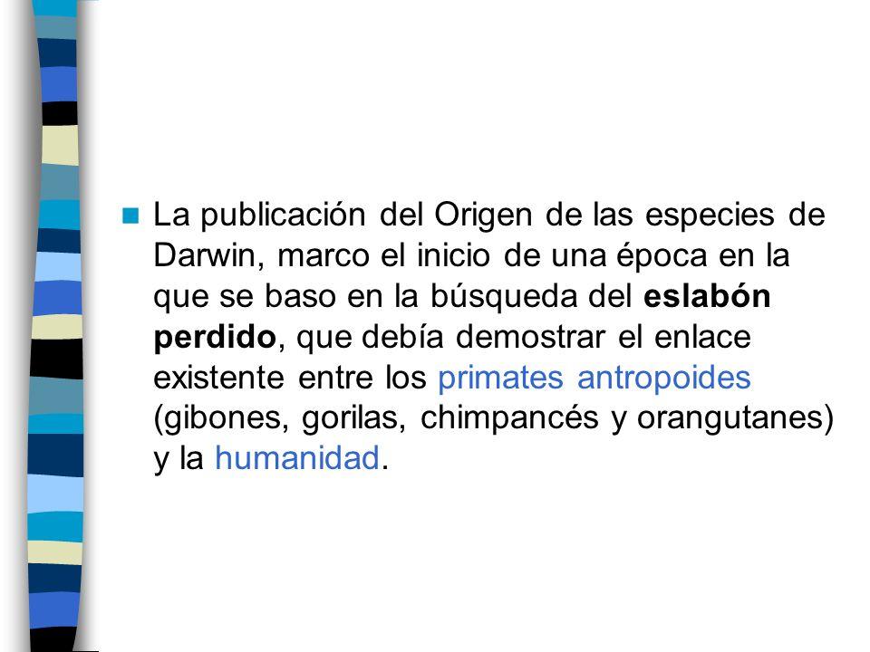 La publicación del Origen de las especies de Darwin, marco el inicio de una época en la que se baso en la búsqueda del eslabón perdido, que debía demostrar el enlace existente entre los primates antropoides (gibones, gorilas, chimpancés y orangutanes) y la humanidad.