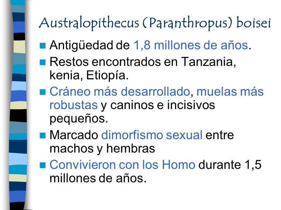 Australopithecus (Paranthropus) boisei