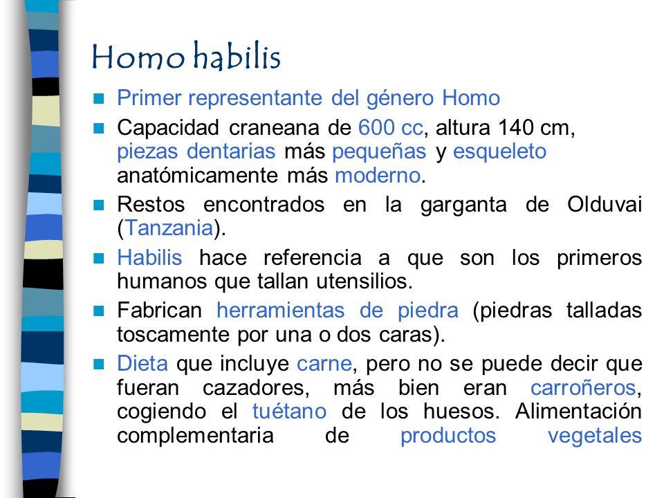 Homo habilis Primer representante del género Homo