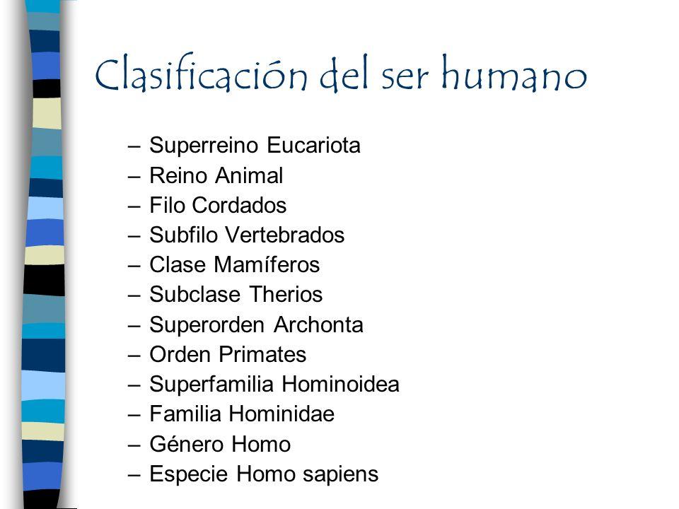 Clasificación del ser humano