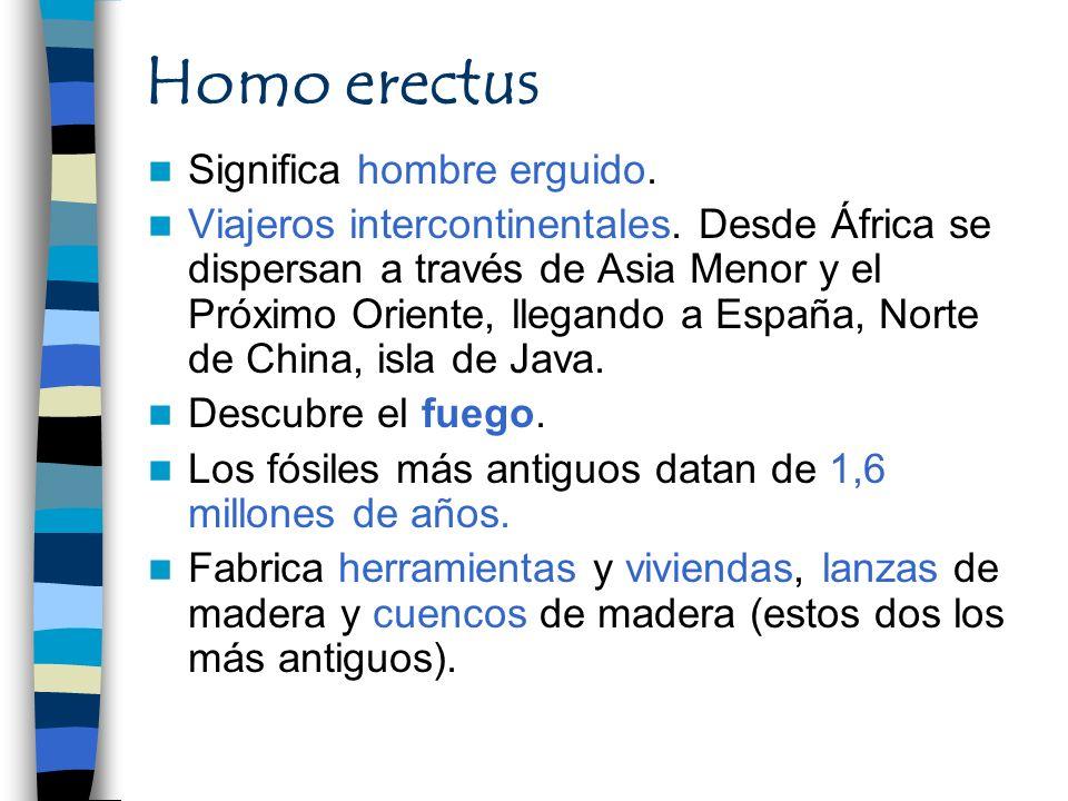 Homo erectus Significa hombre erguido.