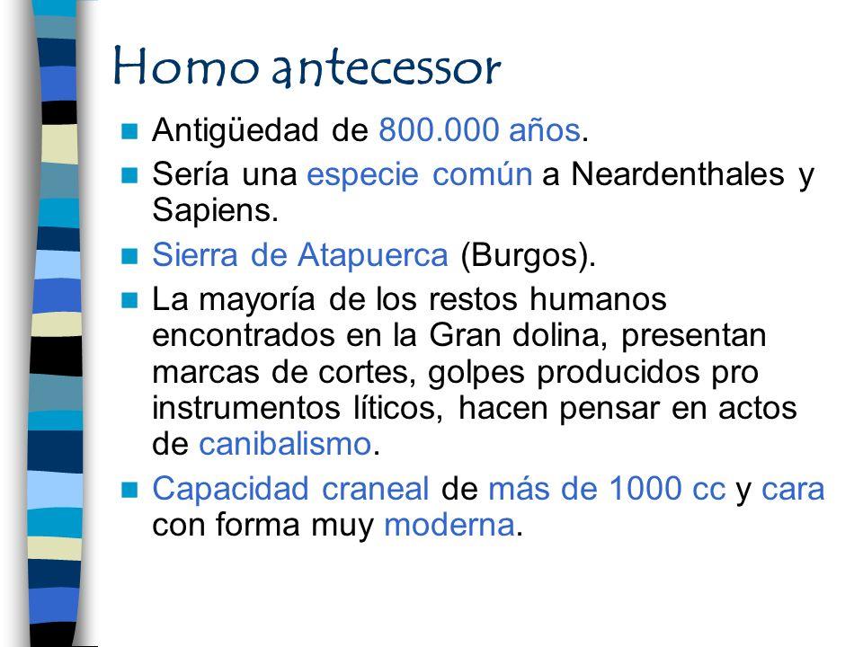 Homo antecessor Antigüedad de 800.000 años.