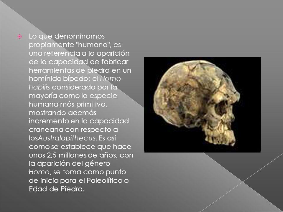 Lo que denominamos propiamente humano , es una referencia a la aparición de la capacidad de fabricar herramientas de piedra en un homínido bípedo: el Homo habilis considerado por la mayoría como la especie humana más primitiva, mostrando además incremento en la capacidad craneana con respecto a losAustralopithecus.