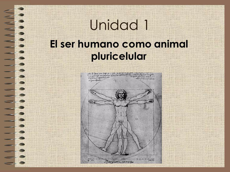 El ser humano como animal pluricelular