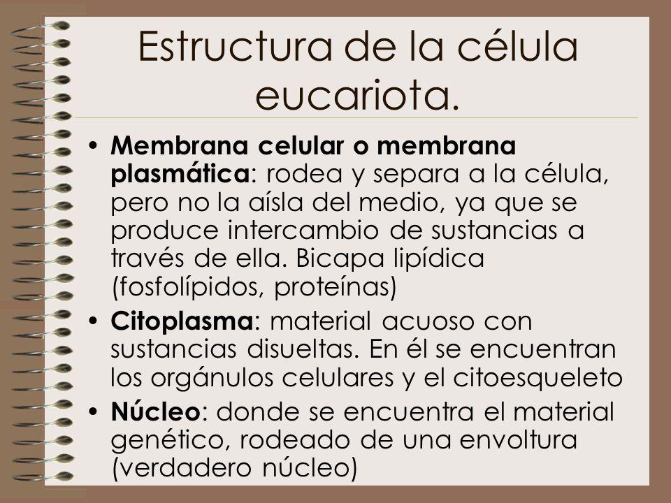 Estructura de la célula eucariota.