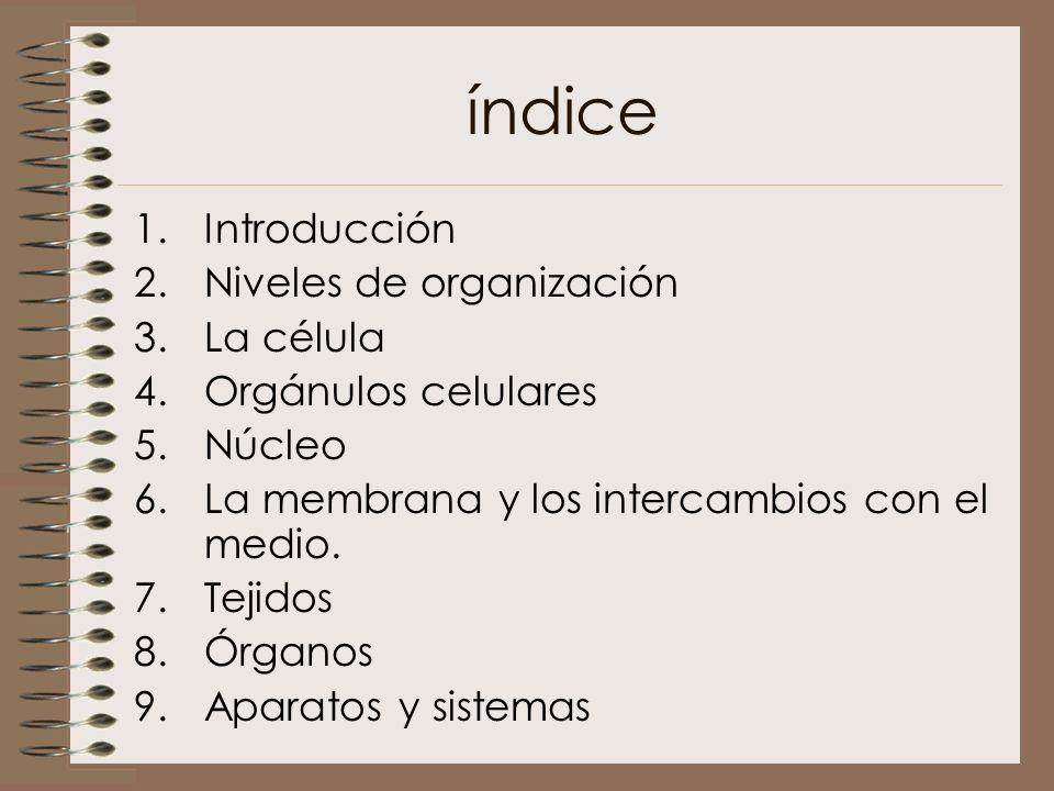 índice Introducción Niveles de organización La célula