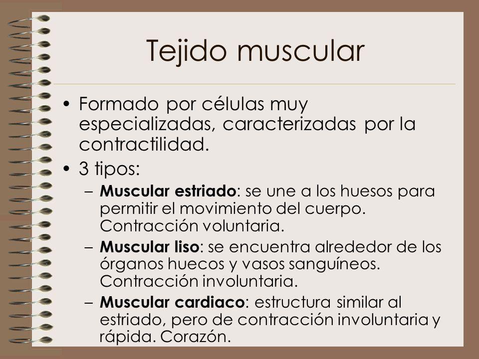 Tejido muscular Formado por células muy especializadas, caracterizadas por la contractilidad. 3 tipos: